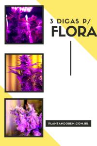 dicas de flora
