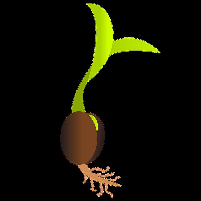 Você já se perguntou como germinar uma semente de maconha medicinal?