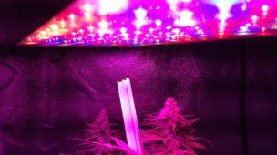 Plantando bem