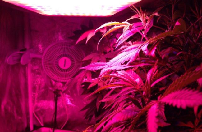 Diário de Cultivo Indoor-5º Episódio- Luzes?!