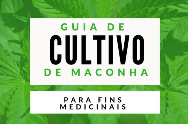 Guia de Cultivo de Maconha Medicinal – Do Zero Até a Colheita