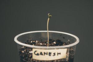 cuidar da planta