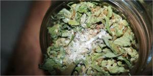 plantas mofo