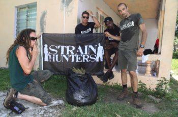 Especial Strain Hunters #3!