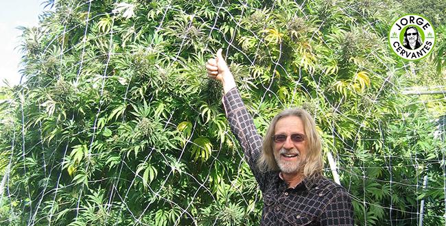 Universidade Cannabis-Universidade Canábica da América Latina