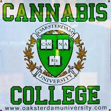 universidade cannabis