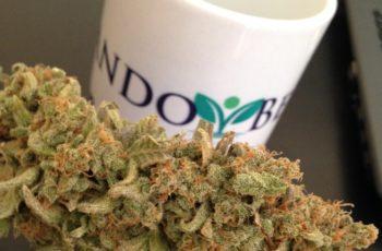 Guia de Cultivo Indoor de Cannabis Medicinal