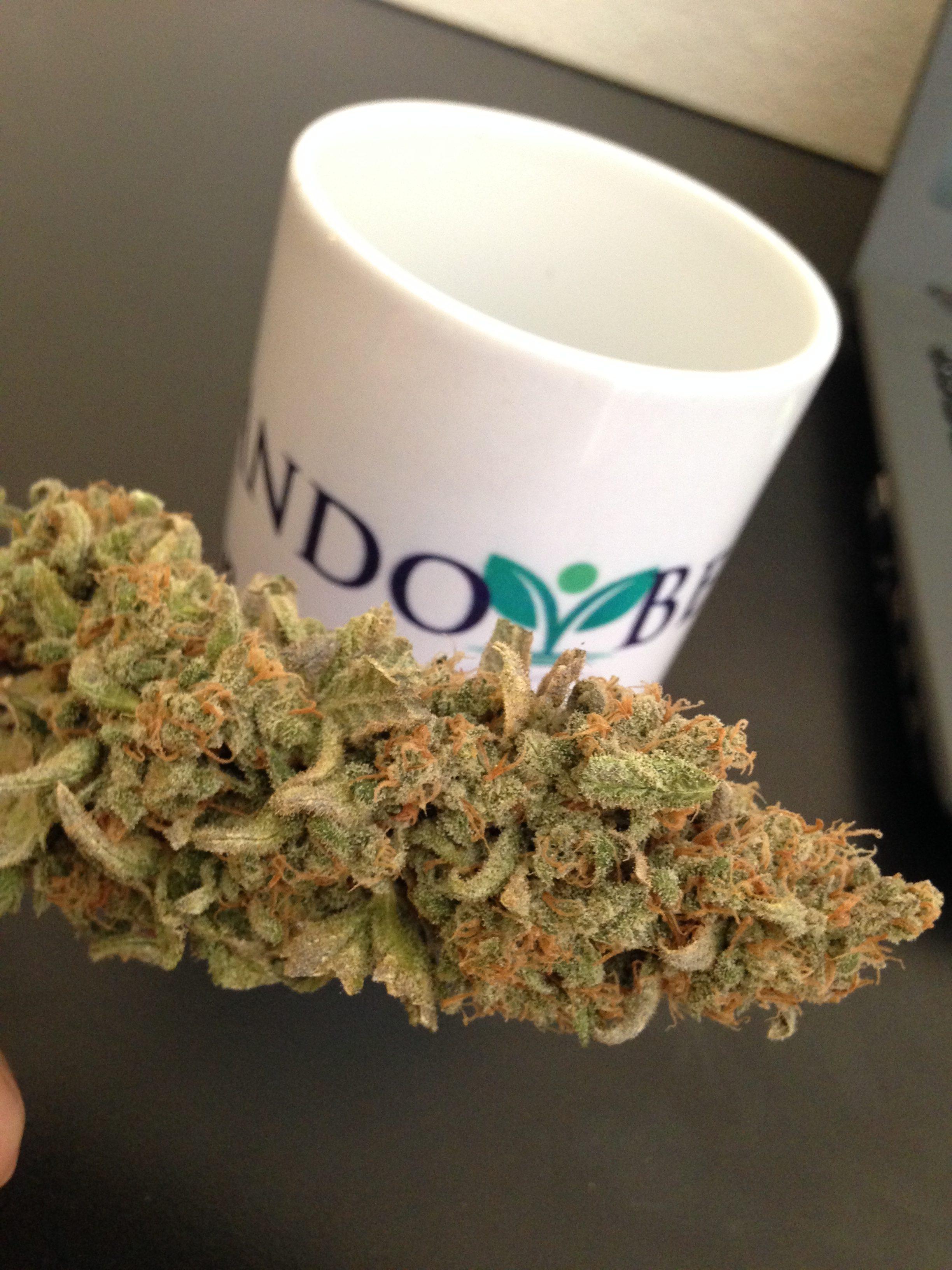 Veja Aqui Por Tempo Limitado: Como Você Pode Ter Colheitas de Cannabis Medicinal de 2 em 2 Meses