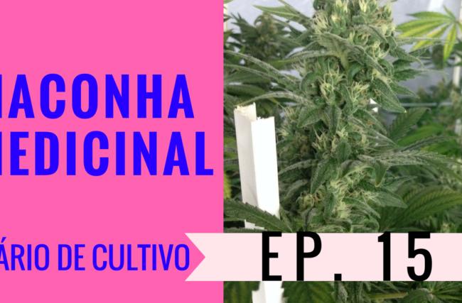 Cultivo Indoor- Maconha Medicinal- Flora- Diário de Cultivo Episódio 15