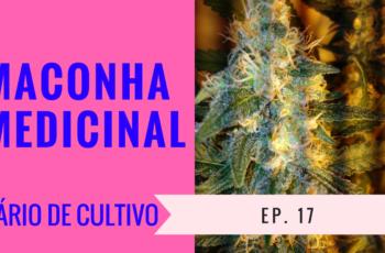 Cultivo Indoor- Maconha Medicinal- Flora- Diário de Cultivo Episódio 17