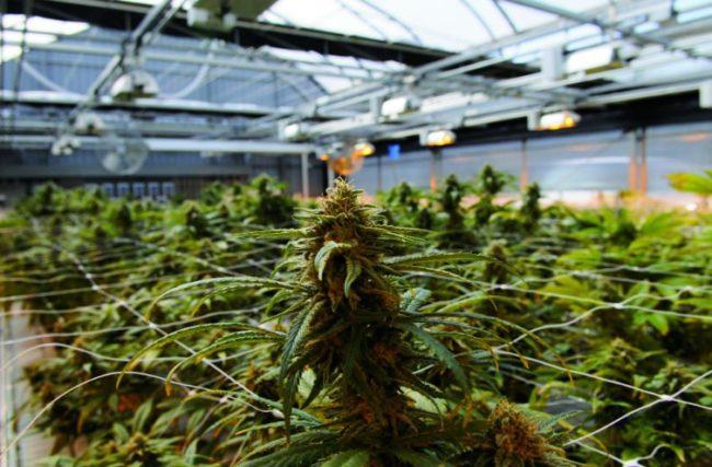 2018 é o Ano da Cannabis Medicinal no Brasil!