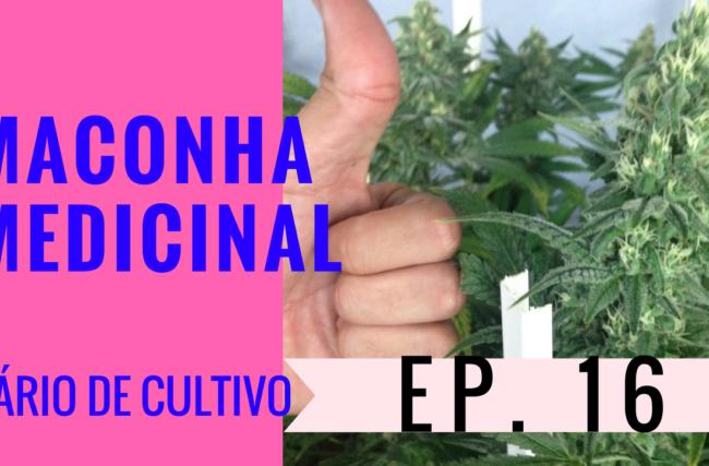 Cultivo Indoor- Maconha Medicinal- Flora- Diário de Cultivo Episódio 16