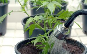 guia de cultivo indoor
