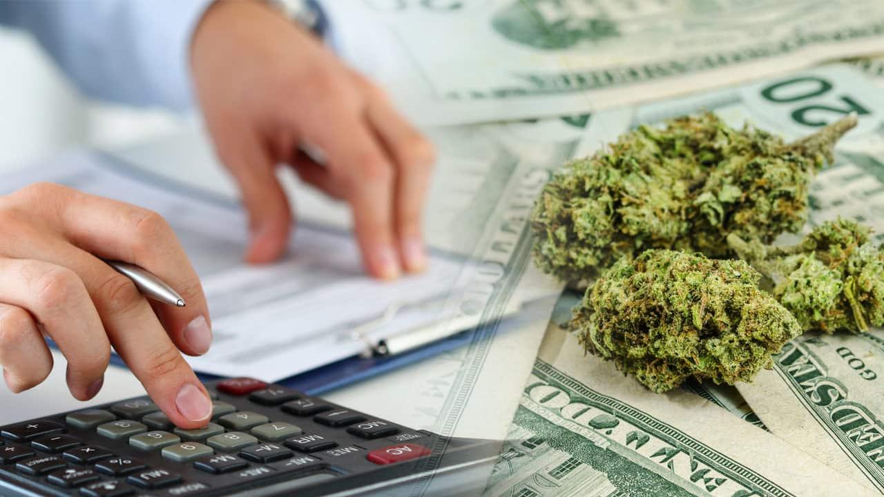 cultivo de cannabis para empresas