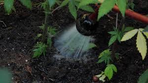 flush maconha