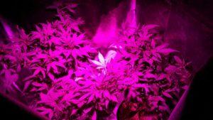 cultivo indoor