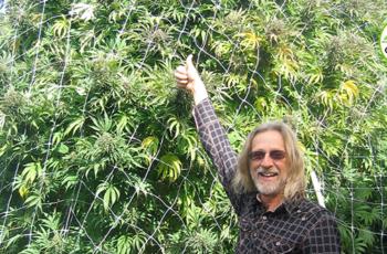 Cultivo Outdoor