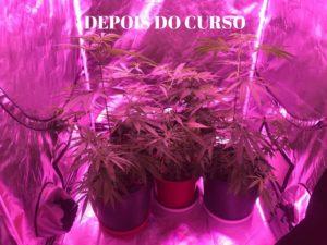 como começar um cultivo outdoor do zero