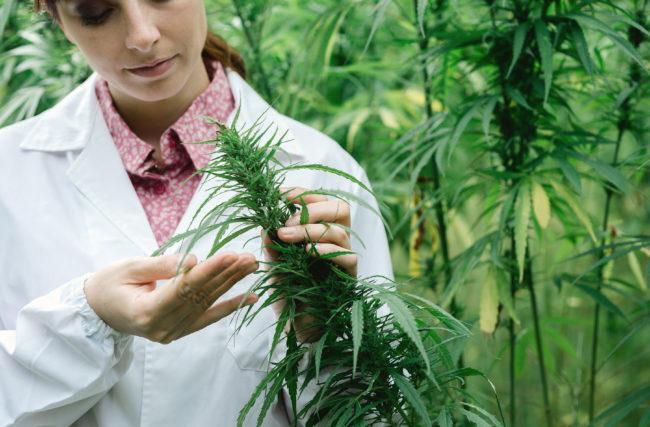 Boa Notícia: A morte da Universidade Cannabis