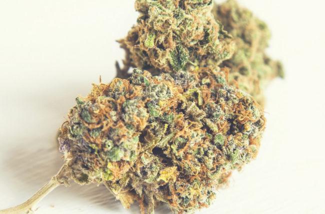 Como Saber se a Cannabis Medicinal é Para Você…