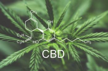 #Growgirl – História da Cannabis Medicinal Contra o Alcoolismo