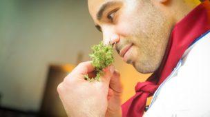 cultivo indoor cheiros e odores