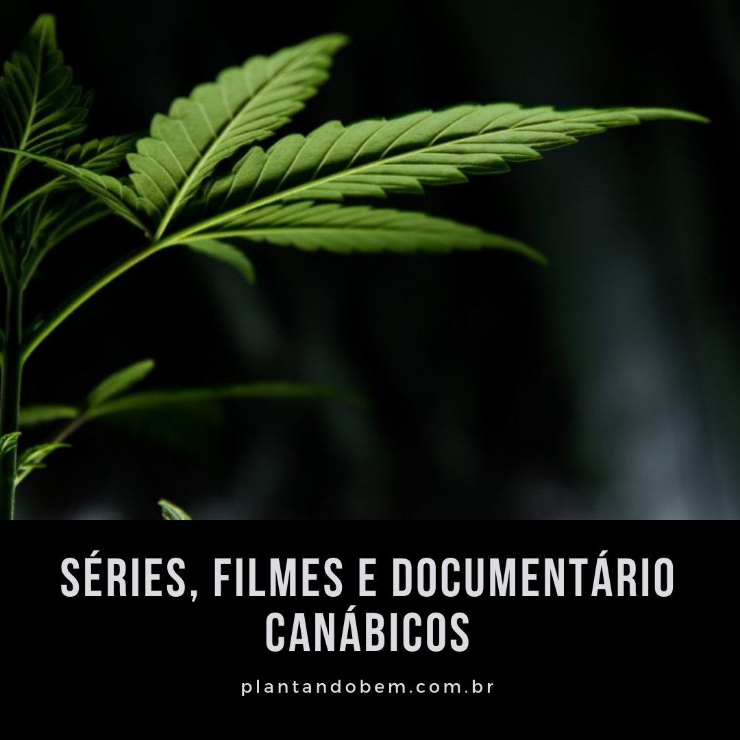 3 FILMES e SÉRIES sobre MACONHA no Netflix