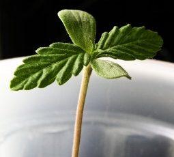 Por que as suas plantas não crescem no CULTIVO INDOOR?!  4 razões