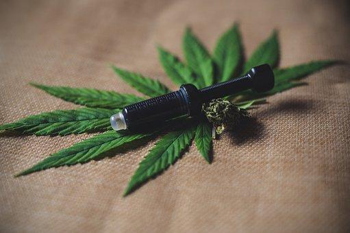 AUTORIZAÇÃO PARA PLANTAR MACONHA ?! *Habeas corpus para cultivo de cannabis medicinal*
