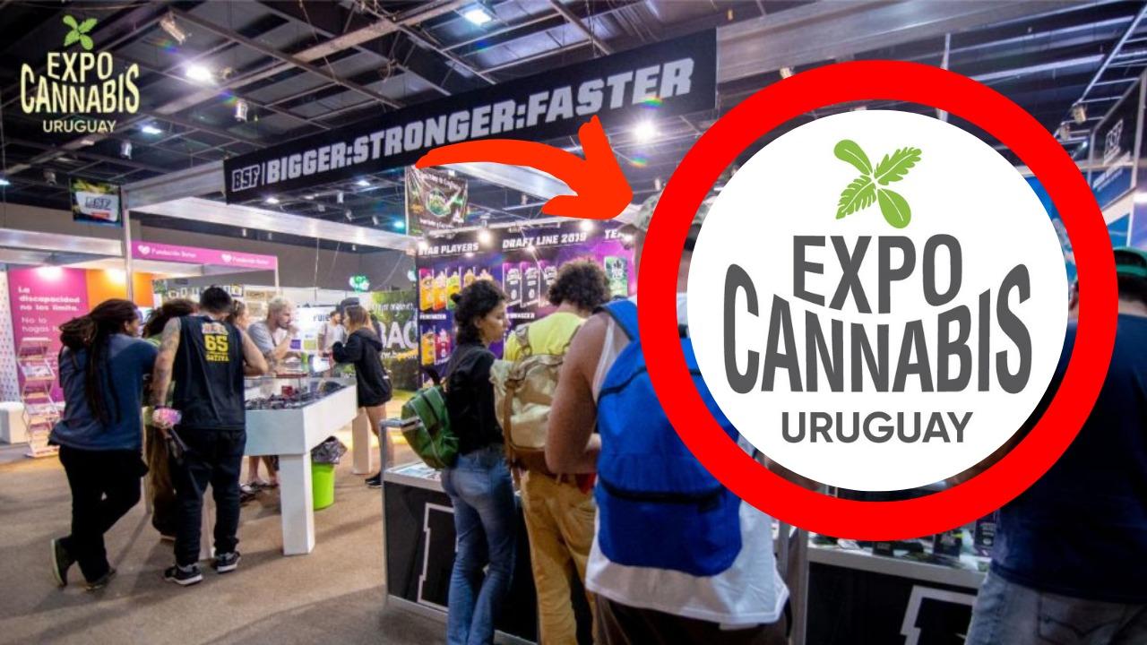 Vou na Expocannabis Uruguai ** Entrevistei um dos Fundadores **