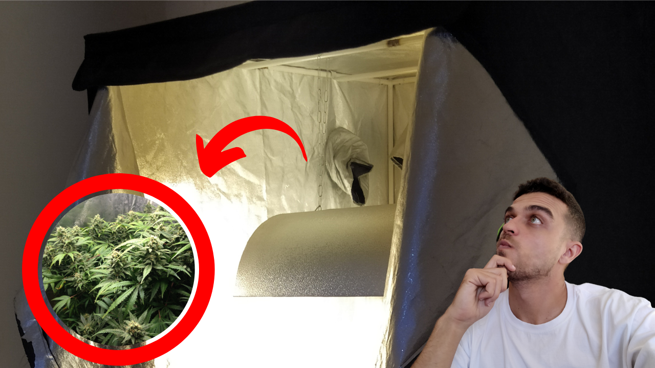 Dá pra usar lampadas HPS na fase vegetativa no cultivo indoor
