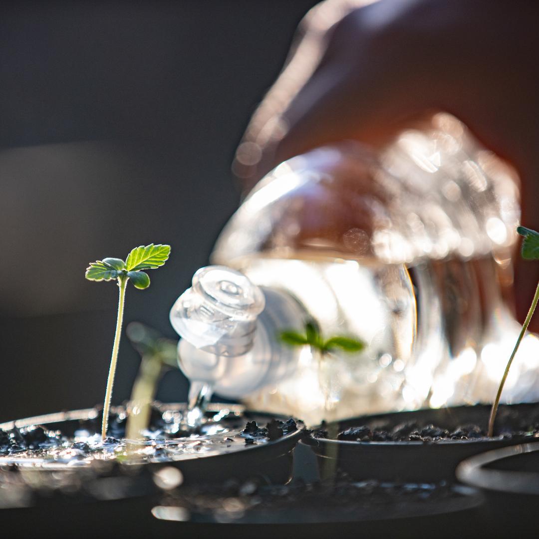 Quais nutrientes e fertilizantes usar para ter uma colheita sem deficiências
