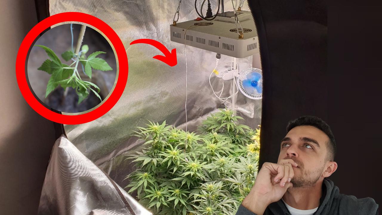 Porque as plantas ficam murchas e como resolver