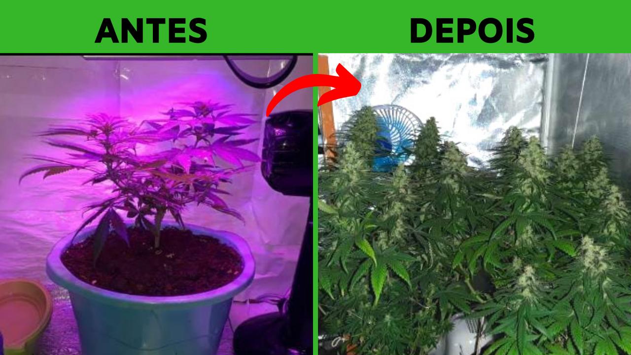 Ele estava desistindo de plantar porque as plantas não ficavam boas
