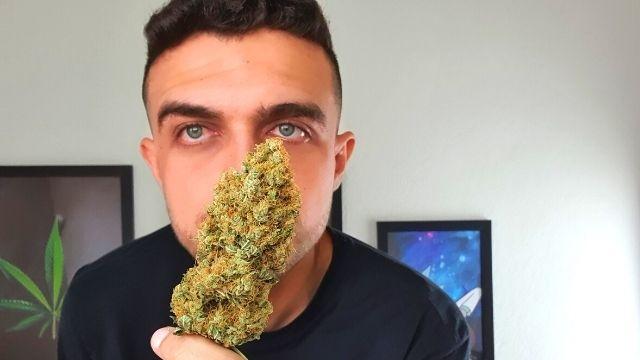 Cannabis sativa indica ruderalis