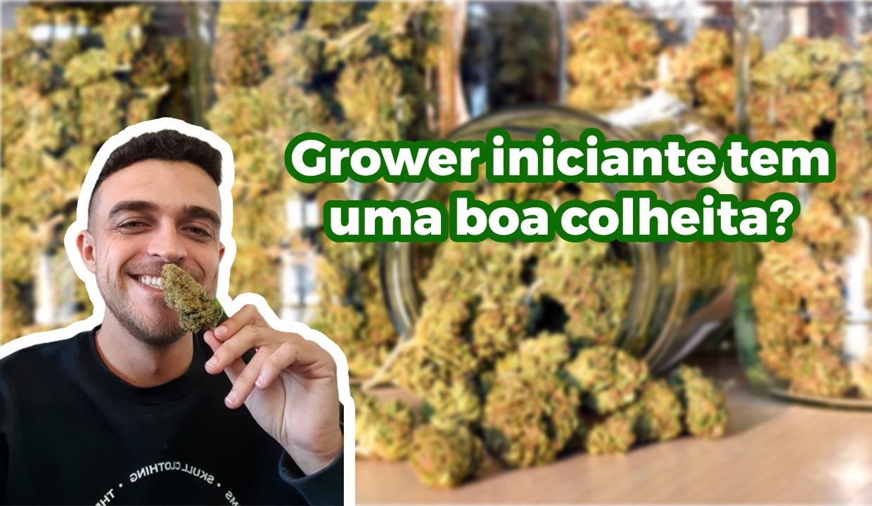 Grower Iniciante tem uma boa primeira colheita ?!