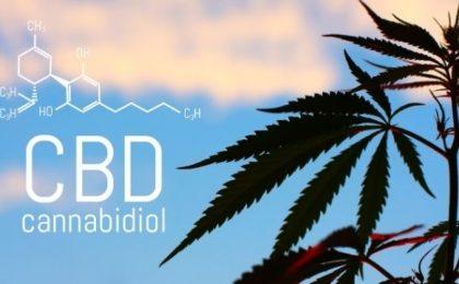 o que é CBD