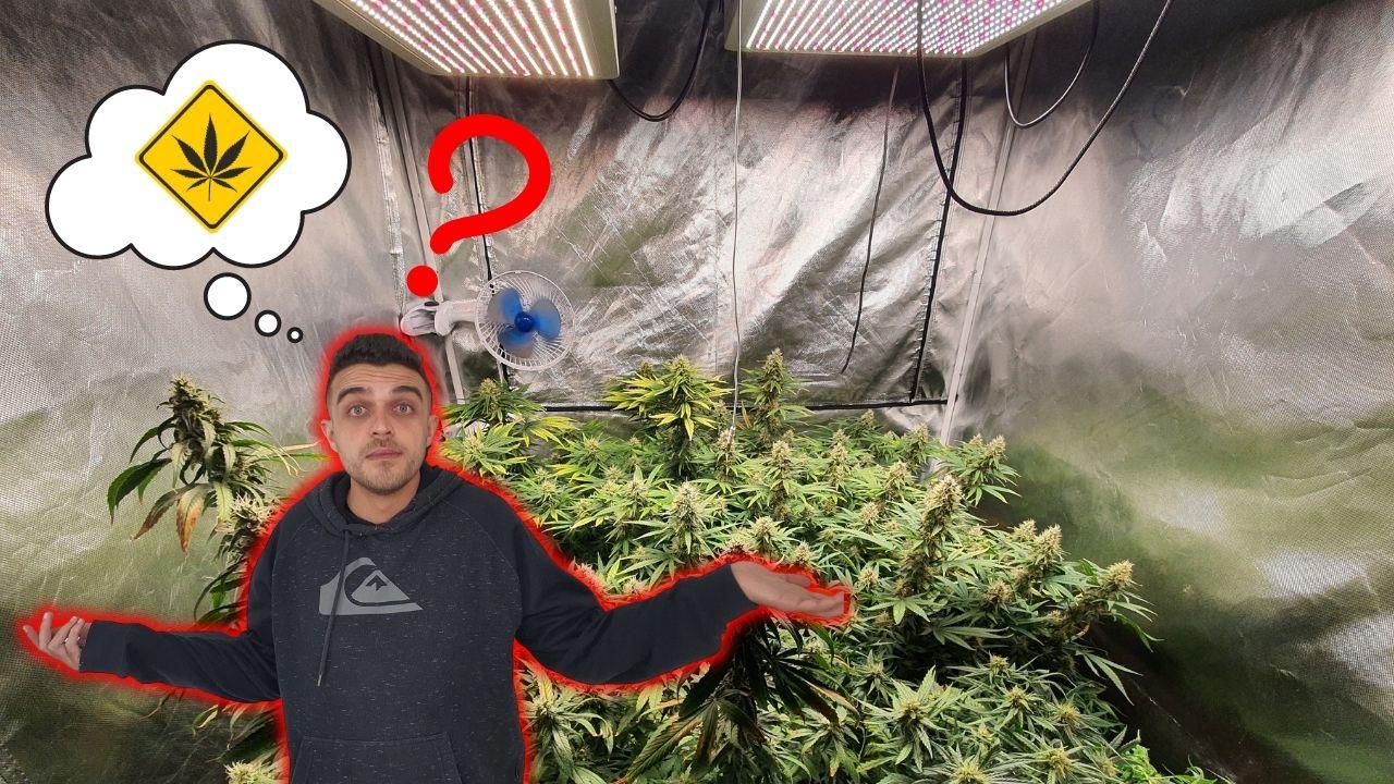 O que não pode faltar no cultivo indoor