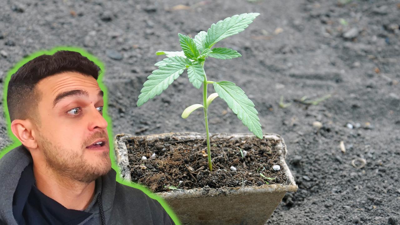O segredo do sucesso do cultivador iniciante